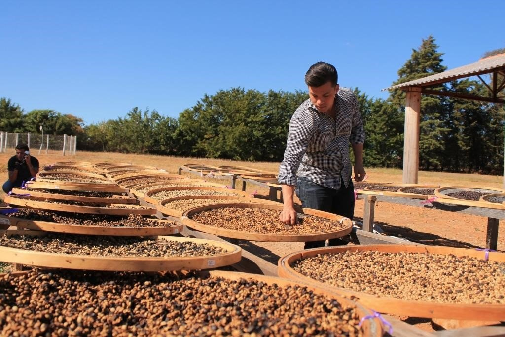 man surrounded by bails of coffee beans. He has his hand in one and has picked some coffee beans up